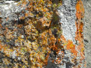 Colorful lichen formations